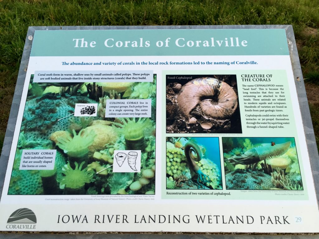 Corals of Coralville