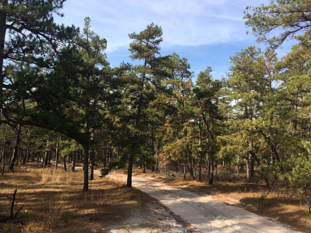 Sand road in Wharton State Forest