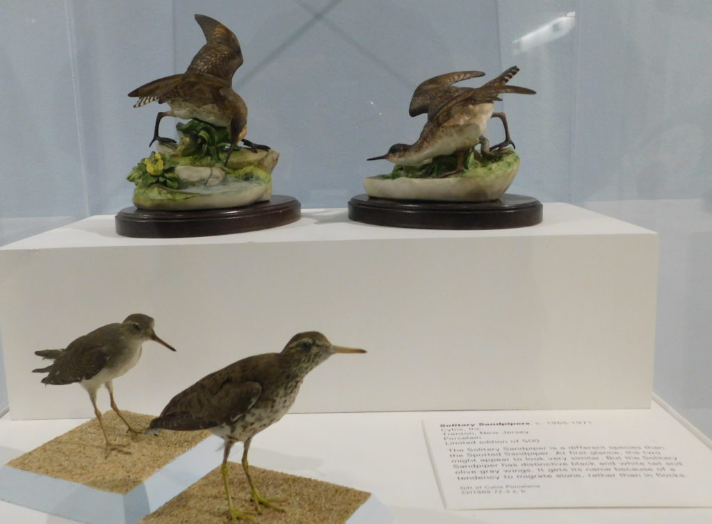 Solitary Sandpipers