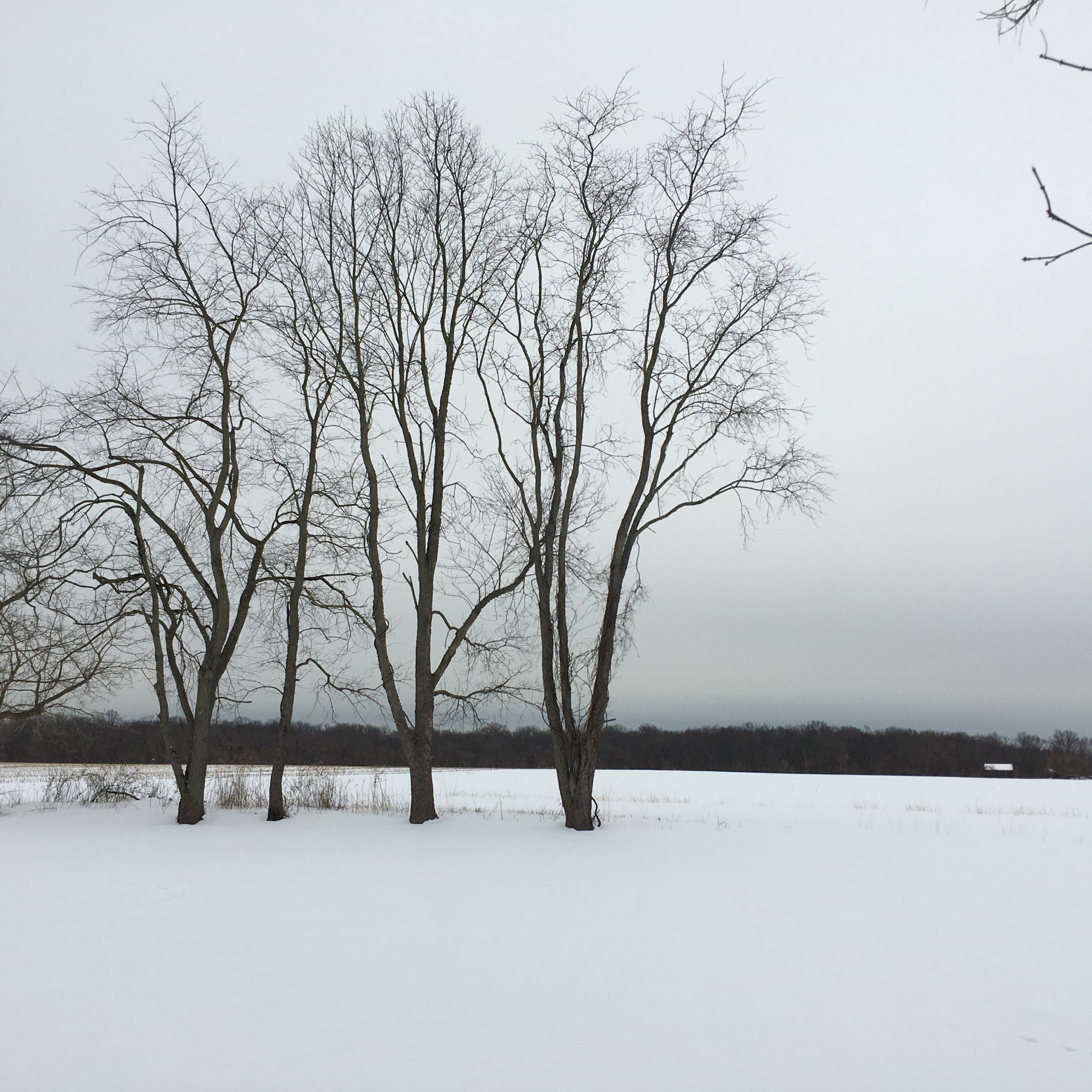 Trees in winter landscape